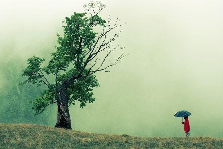 Baum im Nebel mit Menschen mt Schirm